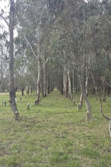Congratulations: Sonja Zeylemaker of Giralang correctly identified last week's photo  as the ACT Landcare Memorial Forest.
