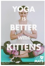 "Modo Yoga's ""cats on mats"" classes are already sold out."