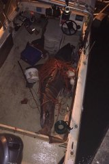 The great white shark leapt into the fisherman's boat.