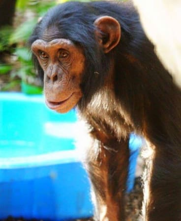 Alon, 7, was brought to the zoo this year from Israel.