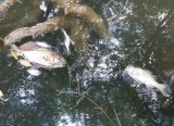 A toxic spill is believed to have killed fish in South Creek.