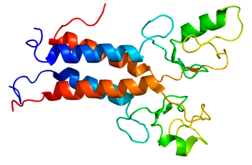 """The structure of the protein produced by the so-called """"breast cancer gene"""", BRCA1."""