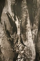 Bonsai/Print: John Hart's 'If you pause, you can almost hear' (2016).