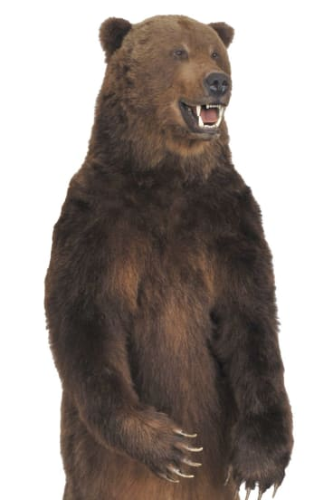Old school: A taxidermy bear at Leonard Joel