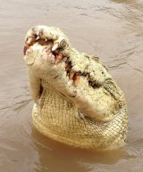 An albino crocodile called Michael Jackson was shot dead on Monday after attacking a fisherman.