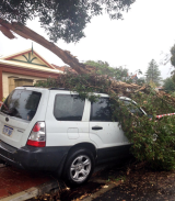 This Subaru was badly damaged by a falling tree in Mount Hawthorn.