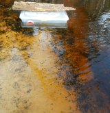 UQ researchers successfully trialed the cane toad trap at Mount Coot-tha.