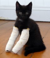 The kittens are expected to stay in their casts until their forelimbs straighten up.