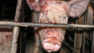 Factory farming has all but replaced traditional farming methods, making the paddock-to-plate process  invisible.
