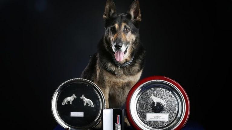 Hero police dog Bosun.