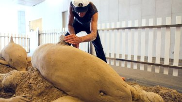 Dennis Massoud working on a dolphin sand sculpture at the Gold Coast Hilton Hotel in 2013 .