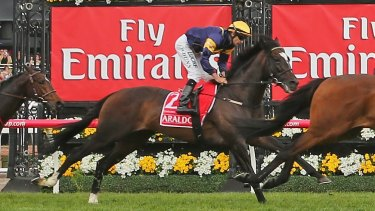 Araldo was put down after shattering a cannon bone when he jumped a steel rail following last year's Melbourne Cup.