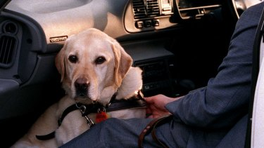 Guide dogs are allowed everywhere - apart from zoos and operating theatres-  and taxi drivers cannot say 'no'.