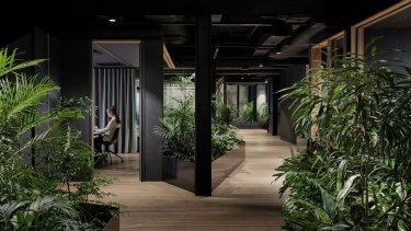 Natural wood and plants adorn Slack's Melbourne office, designed by Breathe Architecture.