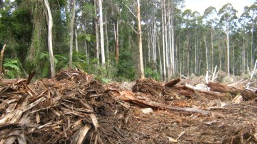 Logging in the Orbost Forest District in East Gippsland in 2010.