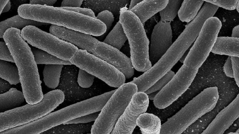 Invisible trace: microbes can give away where you've been.