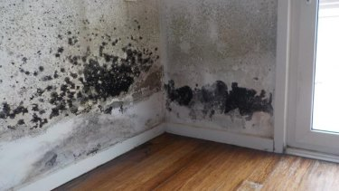 An infestation of black mould in one of the apartments.
