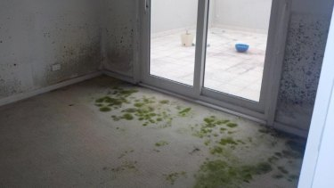 Mould growing on the walls and carpet of one of the units.