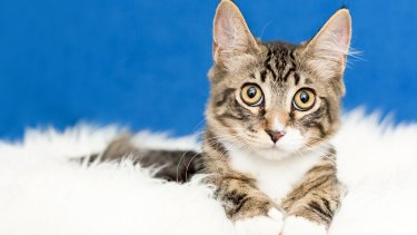 Nikolai is available for adoption.