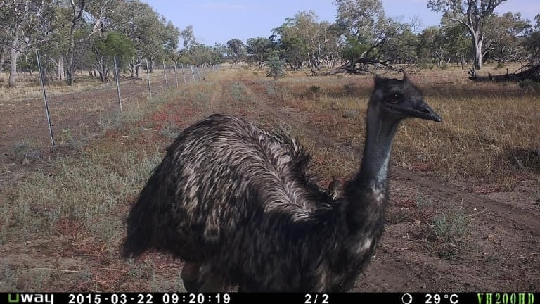 Even emus love getting in on the camera action.
