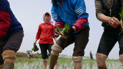 Amid nuclear standoff, South Korea to send tonnes of rice to the North