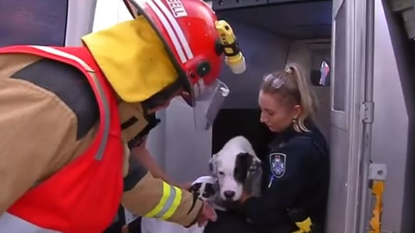 Firefighters save puppies and pets from Kallangur fire