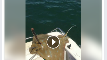 Jockey Michael Walker has been accused of animal cruelty after allegedly torturing a southern eagle ray with a knife on a fishing trip at Hastings.