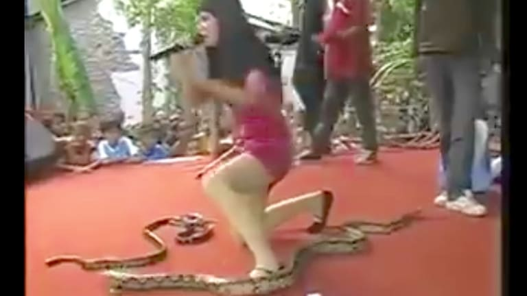 Indonesian singer Irma Bule has died after being bitten on stage by a King Cobra snake.
