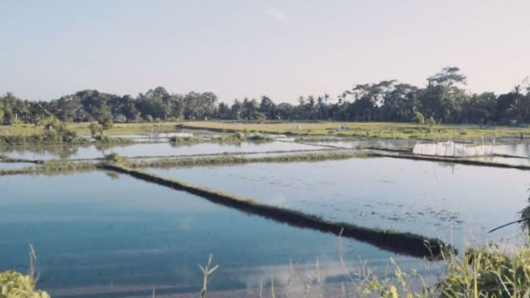 Mr Anggis' land near Ubud in Bali has been in his family for generations.