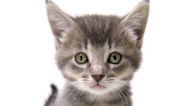 Brisbane City Council has been accused them of leaving nursing kittens behind to starve to death.