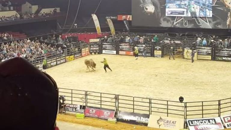 A bucking bull snapped its leg while being ridden at an Adelaide rodeo.