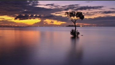 After the destructions of a Brisbane icon, one local photographer plans to immortalise the memory of Wellington Point's 'lone mangrove'.