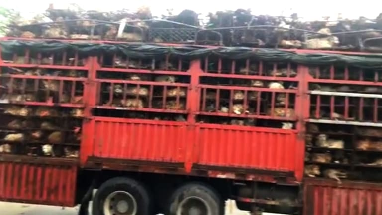 A truckload of dogs and cats that was intercepted by Chinese activists.