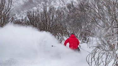 A skier shredding through fantastic snow at Mount Hotham.
