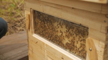 Tapcomb has been accused of copying Flow Hive with its tappable bee hive.