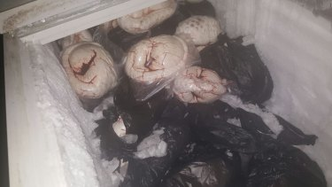 Frozen pangolin meat seized in Jombang, East Java last year.