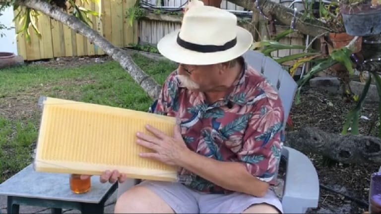 Inside a Tapcomb hive, which its makers claim is substantially different to rival products.