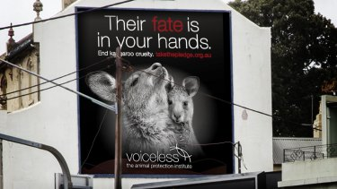 Another Voiceless billboard in Sydney.