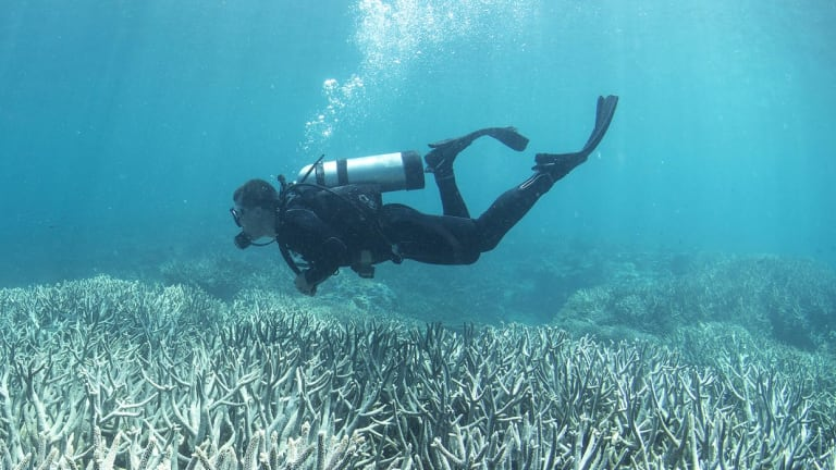 A diver checking out the bleaching at Heron Island in February 2016.