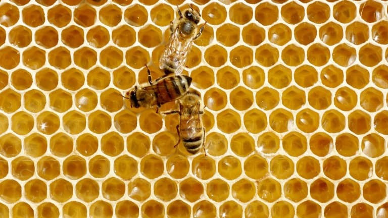 Suburban beekeeping has been promoted as a way to assist both bee population growth and aspects of the environment that depend on their activity.