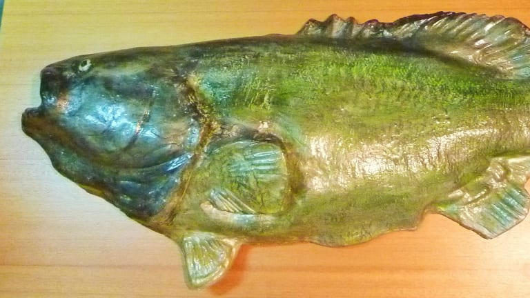Mounted Murray Cod at the Yass & District Museum.