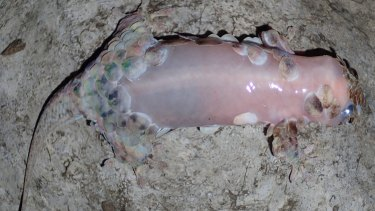 It looks like a fish until you grab it, and then it looks like a naked chicken breast,€ said Mark D. Scherz, a doctoral candidate at Ludwig Maximilian University of Munich.