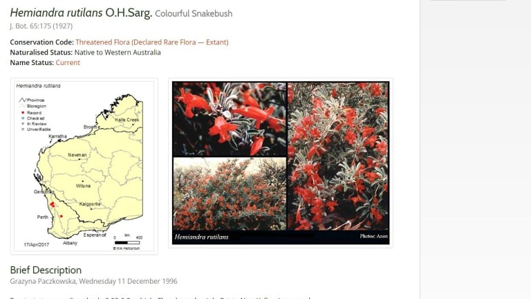 The colourful snakebush is one of the species on the critically endangered list that sources tell WAtoday is extinct, though DPaW disagrees.