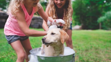 What responsibilities do your kids have for household chores?