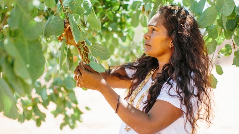 O'Meara's aunt, Gina Kitchener, harvests for Kimberly Wild Gubinge.