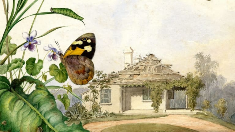 Common brown butterfly (detail) by Helena Scott.