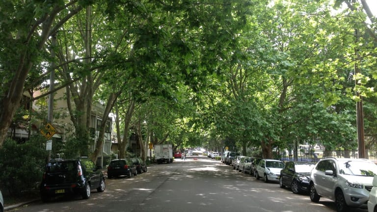 Cooling coverage: a leafy street in Alexandria.