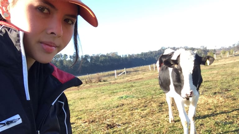 Alexandra Green, a 21-year-old honours student at Sydney University, developed a test to see if cows could follow sound to navigate a maze.