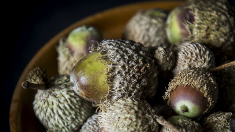 Acorns Australia managing director George Lucas says the acorns name resonates in Europe and the English speaking world, but not in South America or Asia.