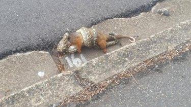 Passerby Adrian Brand said the possum was still alive as it was being eaten.